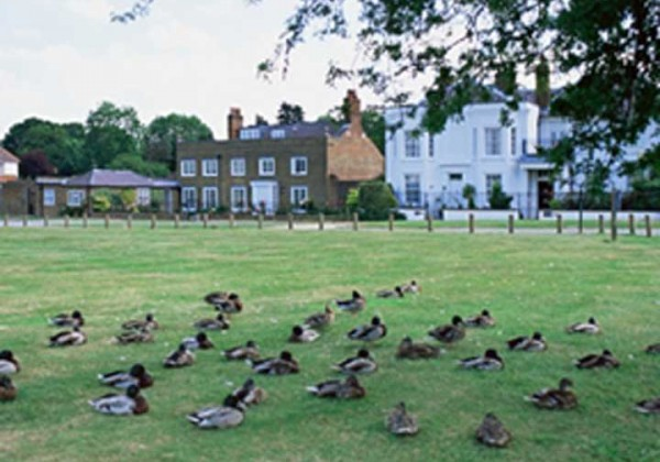 ducks on a village green