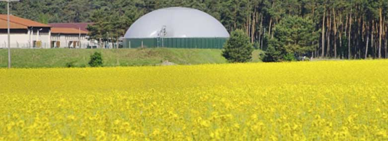 Field of rapeseed with farm storage