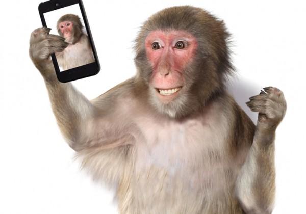 Monkey - selfie