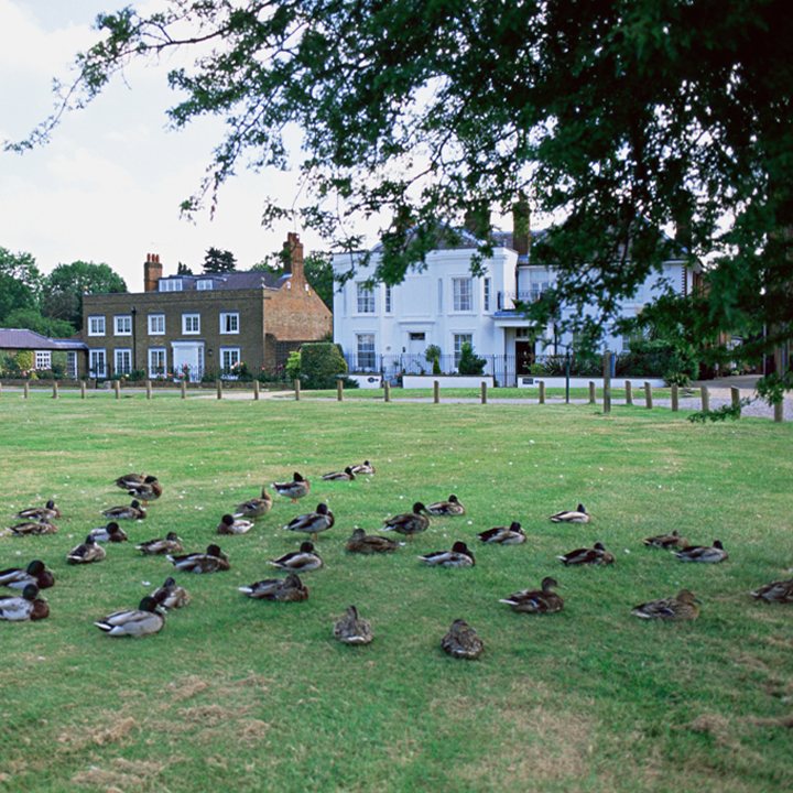 Village green with ducks