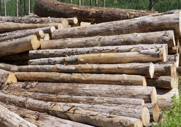 Chopped wood logs stacked in forest woodlands renewable green biomass energy summer sun