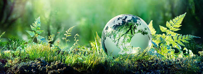 Environment-earth-on-grass-jpg-781x285.jpg