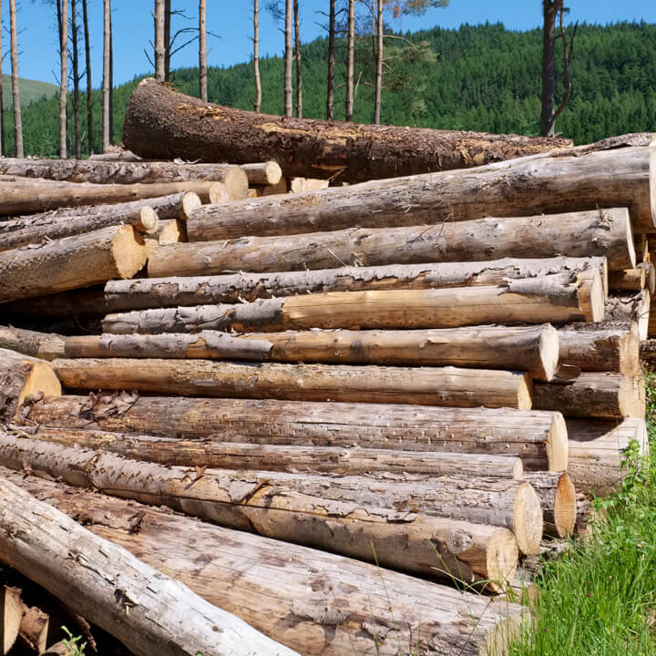 chopped_wood_logs_stacked_in_forest