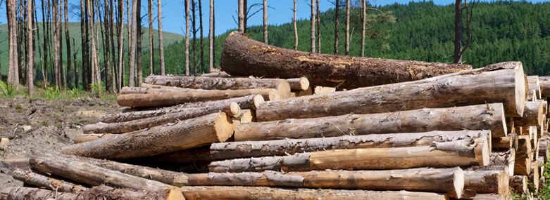 chopped_wood_logs_stacked_in_forest_woodlands