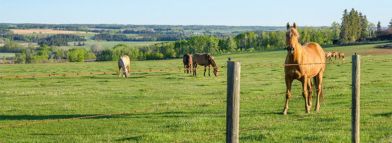 horses_in_a_field