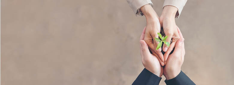 2 peoples hands holding a green seedling flower
