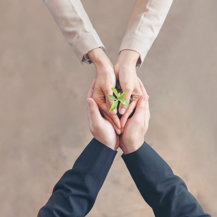 2 sets of hands holding a green seedling flower